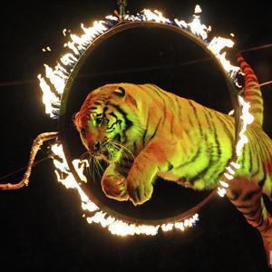 Цирки Урмар