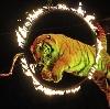 Цирки в Урмарах
